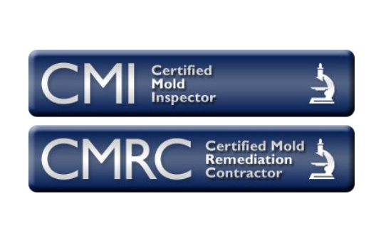clean air, mold contractor, black mold testing